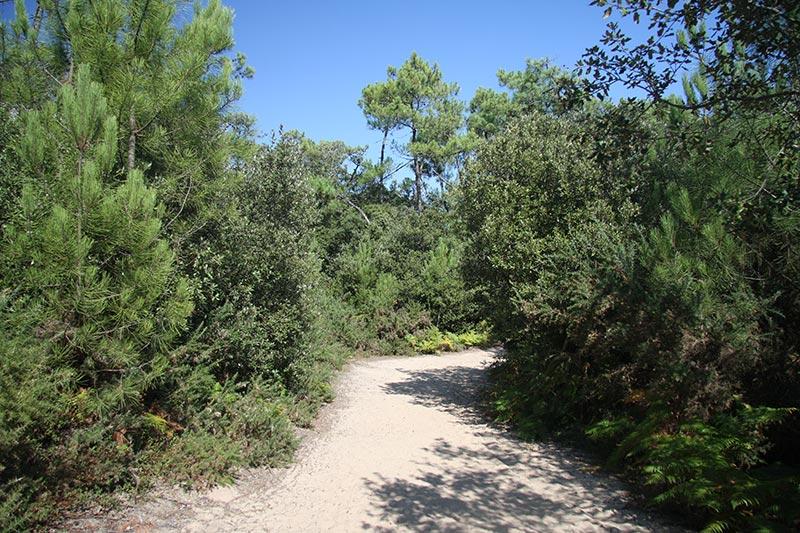 La forêt de Saint Nicolas