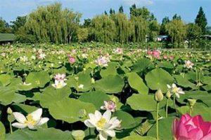 Parc floral de la cour d'aron
