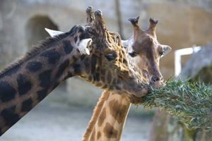 zoo lessablesdolonne