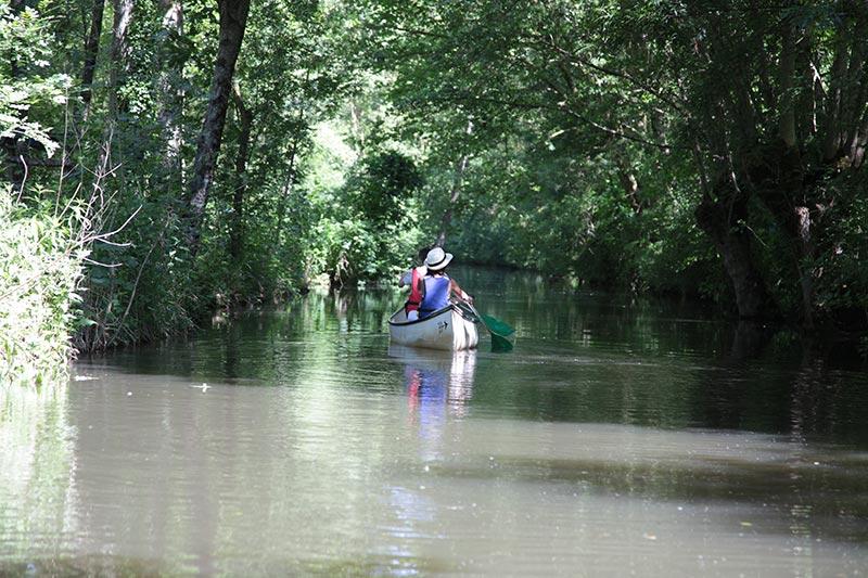 promenades en barque sur le marais poitevin
